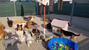 0830 Hunde